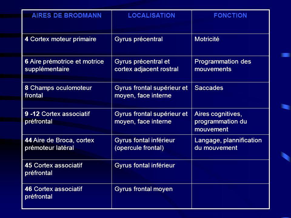Aires cognitives, programmation du mouvement Gyrus frontal supérieur et moyen, face interne 9 -12 Cortex associatif préfrontal Gyrus fontal inférieur45 Cortex associatif préfrontal Langage, plannification du mouvement Gyrus fontal inférieur (opercule frontal) 44 Aire de Broca, cortex prémoteur latéral Gyrus frontal moyen46 Cortex associatif préfrontal SaccadesGyrus frontal supérieur et moyen, face interne 8 Champs oculomoteur frontal Programmation des mouvements Gyrus précentral et cortex adjacent rostral 6 Aire prémotrice et motrice supplémentaire MotricitéGyrus précentral4 Cortex moteur primaire FONCTIONLOCALISATIONAIRES DE BRODMANN