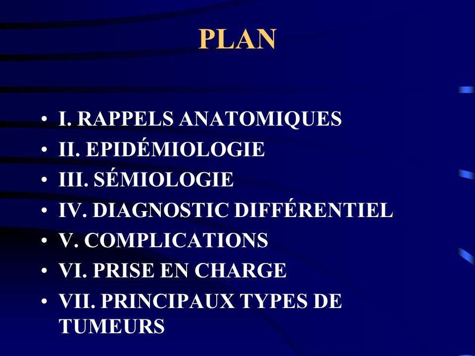 PLAN I.RAPPELS ANATOMIQUES II. EPIDÉMIOLOGIE III.