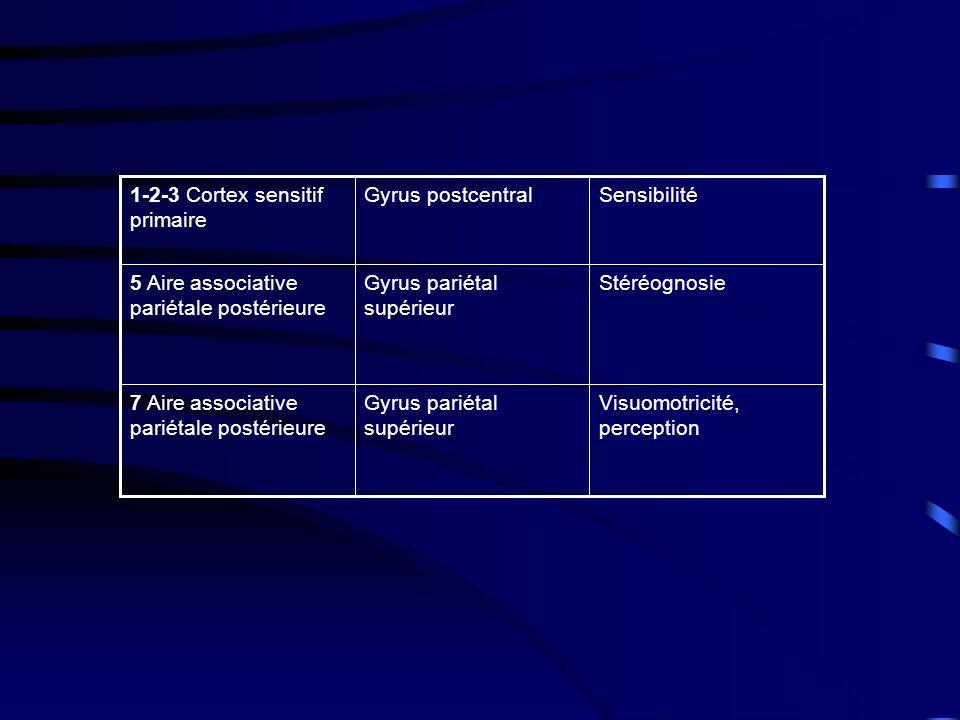 StéréognosieGyrus pariétal supérieur 5 Aire associative pariétale postérieure Visuomotricité, perception Gyrus pariétal supérieur 7 Aire associative pariétale postérieure SensibilitéGyrus postcentral1-2-3 Cortex sensitif primaire