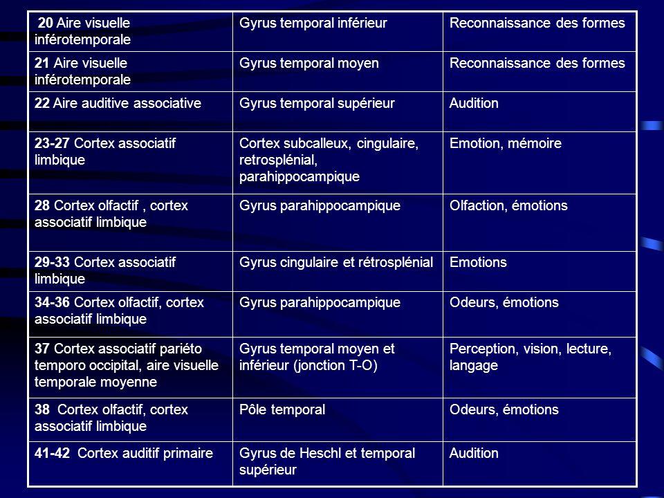 Odeurs, émotionsPôle temporal38 Cortex olfactif, cortex associatif limbique Odeurs, émotionsGyrus parahippocampique34-36 Cortex olfactif, cortex associatif limbique EmotionsGyrus cingulaire et rétrosplénial29-33 Cortex associatif limbique Olfaction, émotionsGyrus parahippocampique28 Cortex olfactif, cortex associatif limbique Emotion, mémoireCortex subcalleux, cingulaire, retrosplénial, parahippocampique 23-27 Cortex associatif limbique AuditionGyrus de Heschl et temporal supérieur 41-42 Cortex auditif primaire Perception, vision, lecture, langage Gyrus temporal moyen et inférieur (jonction T-O) 37 Cortex associatif pariéto temporo occipital, aire visuelle temporale moyenne AuditionGyrus temporal supérieur22 Aire auditive associative Reconnaissance des formesGyrus temporal moyen21 Aire visuelle inférotemporale Reconnaissance des formesGyrus temporal inférieur 20 Aire visuelle inférotemporale
