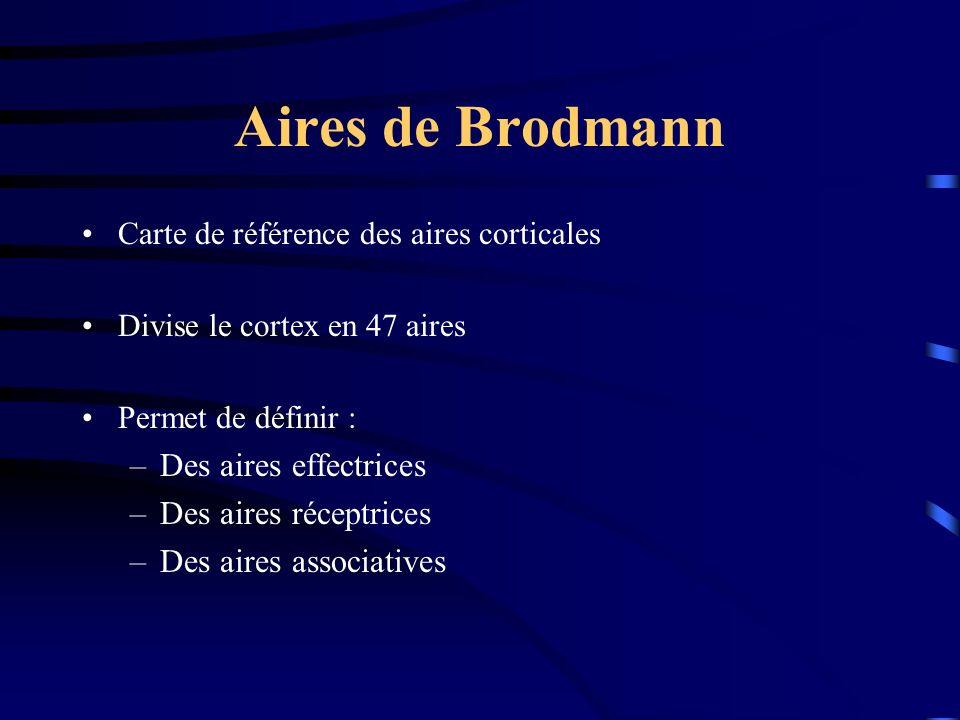Aires de Brodmann Carte de référence des aires corticales Divise le cortex en 47 aires Permet de définir : –Des aires effectrices –Des aires réceptrices –Des aires associatives