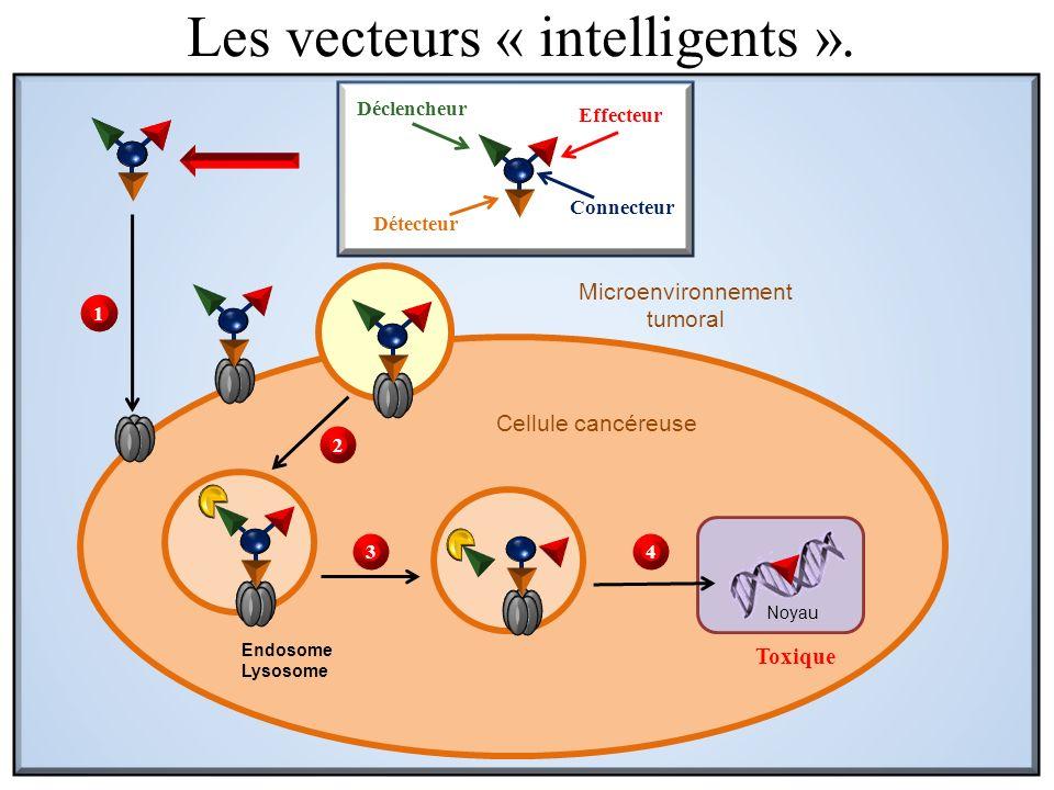 Cellule cancéreuse Endosome Lysosome Toxique Noyau Microenvironnement tumoral Déclencheur Détecteur Effecteur Connecteur 1 2 34 Les vecteurs « intelli