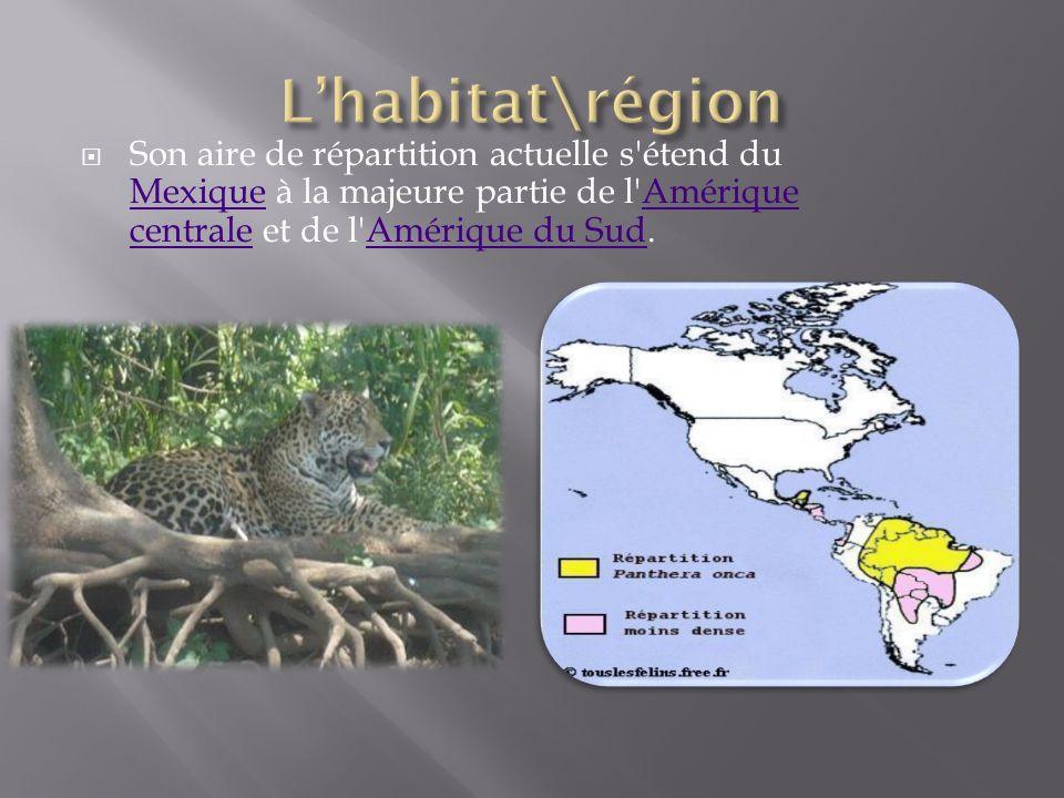 Le jaguar pèse 80 kg.