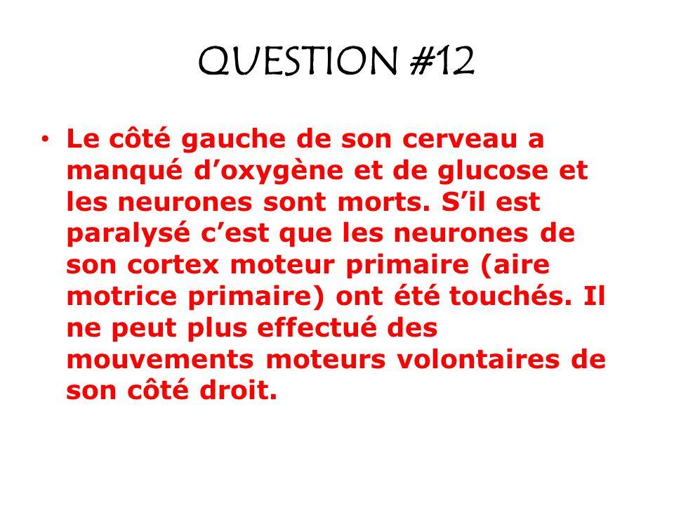 QUESTION #12 Le côté gauche de son cerveau a manqué doxygène et de glucose et les neurones sont morts. Sil est paralysé cest que les neurones de son c