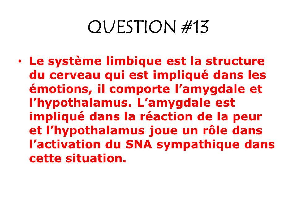 QUESTION #13 Le système limbique est la structure du cerveau qui est impliqué dans les émotions, il comporte lamygdale et lhypothalamus. Lamygdale est