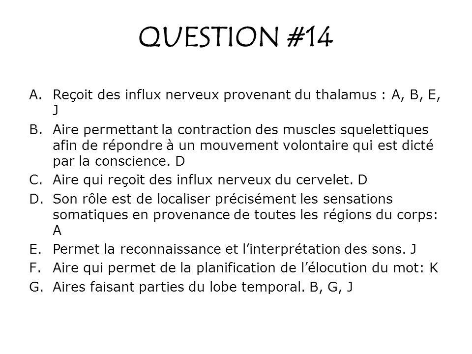 QUESTION #14 A.Reçoit des influx nerveux provenant du thalamus : A, B, E, J B.Aire permettant la contraction des muscles squelettiques afin de répondr