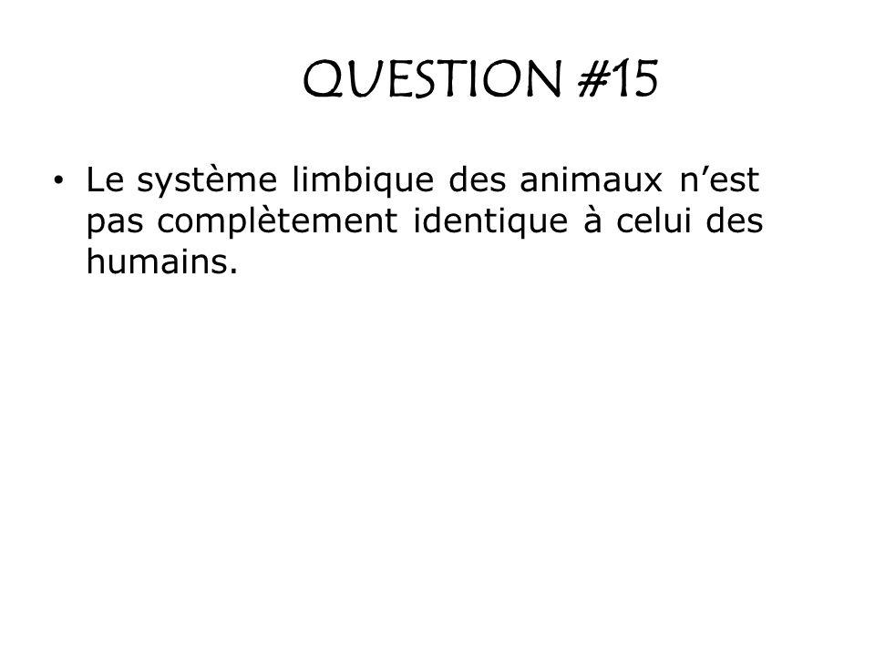 QUESTION #15 Le système limbique des animaux nest pas complètement identique à celui des humains.