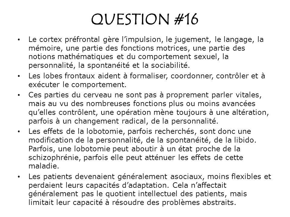 QUESTION #16 Le cortex préfrontal gère limpulsion, le jugement, le langage, la mémoire, une partie des fonctions motrices, une partie des notions math