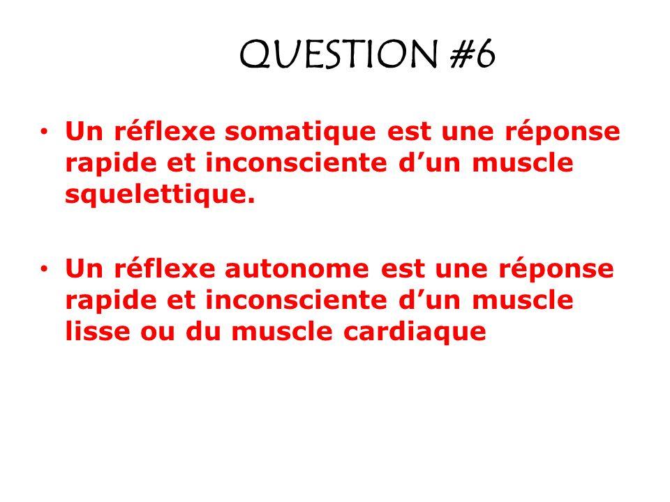 QUESTION #6 Un réflexe somatique est une réponse rapide et inconsciente dun muscle squelettique. Un réflexe autonome est une réponse rapide et inconsc