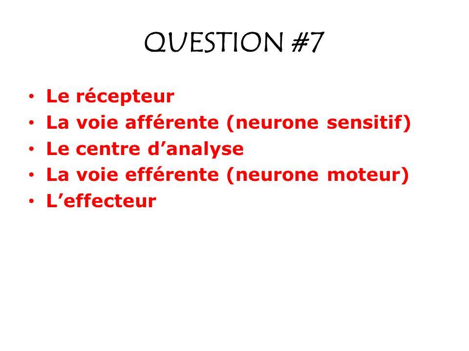 QUESTION #7 Le récepteur La voie afférente (neurone sensitif) Le centre danalyse La voie efférente (neurone moteur) Leffecteur