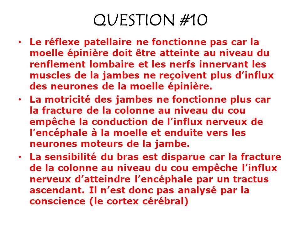 QUESTION #10 Le réflexe patellaire ne fonctionne pas car la moelle épinière doit être atteinte au niveau du renflement lombaire et les nerfs innervant