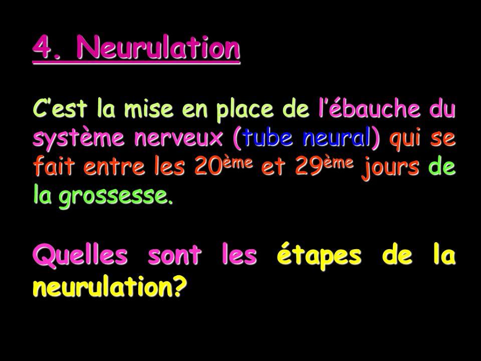 4. Neurulation Cest la mise en place de lébauche du système nerveux (tube neural) qui se fait entre les 20ème et 29ème jours de la grossesse. Quelles