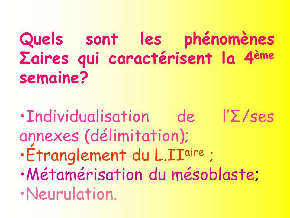 Quels sont les phénomènes Σaires qui caractérisent la 4 ème semaine? Individualisation de lΣ/ses annexes (délimitation); Étranglement du L.II aire ; M