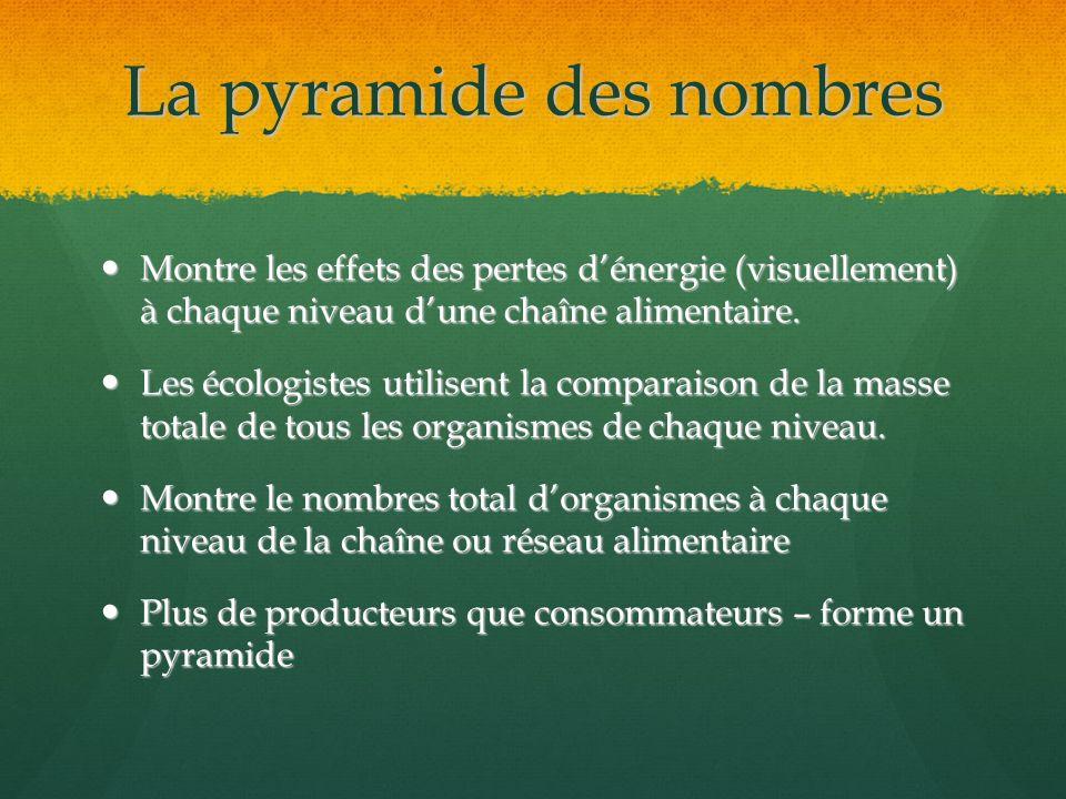 La pyramide des nombres Montre les effets des pertes dénergie (visuellement) à chaque niveau dune chaîne alimentaire. Montre les effets des pertes dén