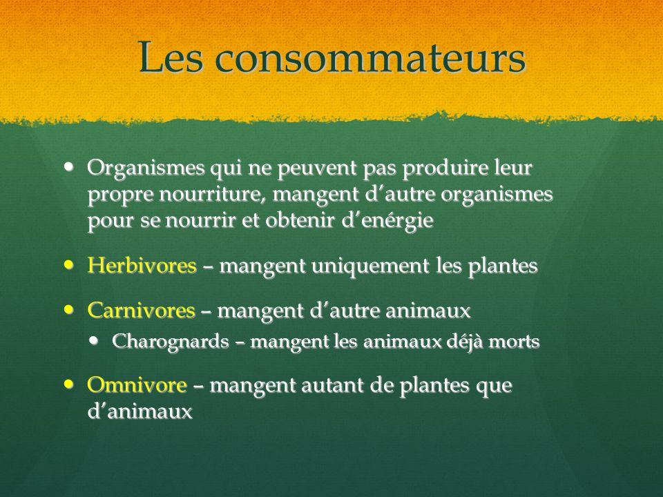 Les consommateurs Organismes qui ne peuvent pas produire leur propre nourriture, mangent dautre organismes pour se nourrir et obtenir denérgie Organis