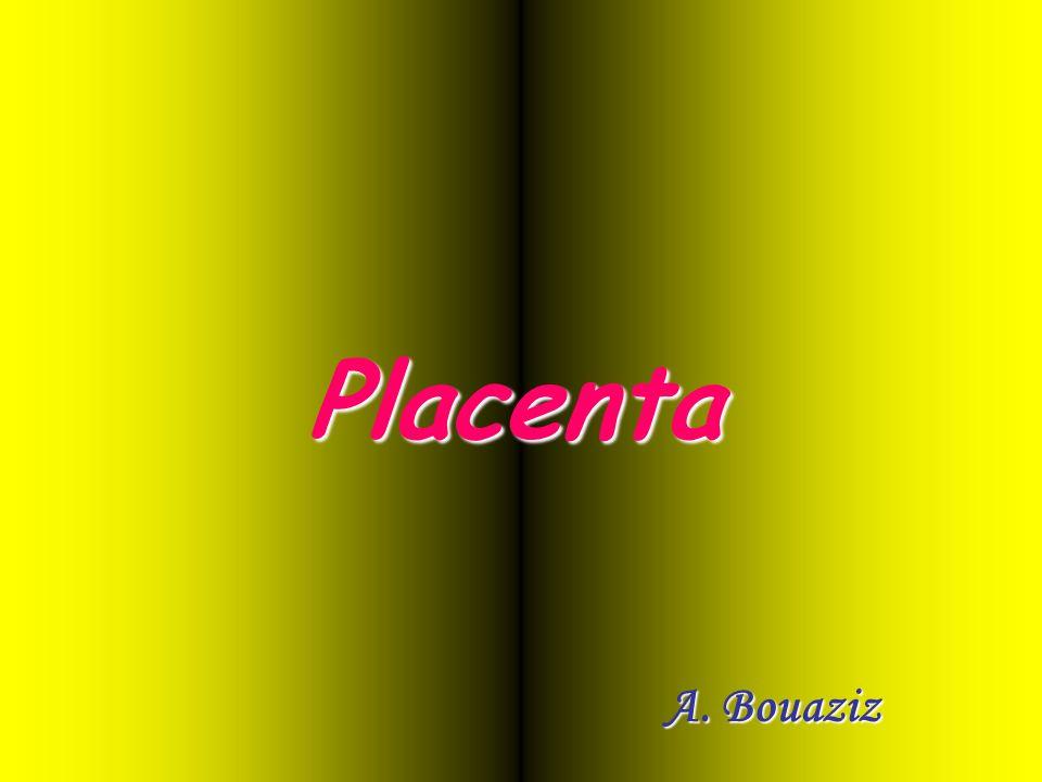 Grosse veine ombilicale impaire 2 artères ombilicales Cordon ombilical Placenta C.F.E.