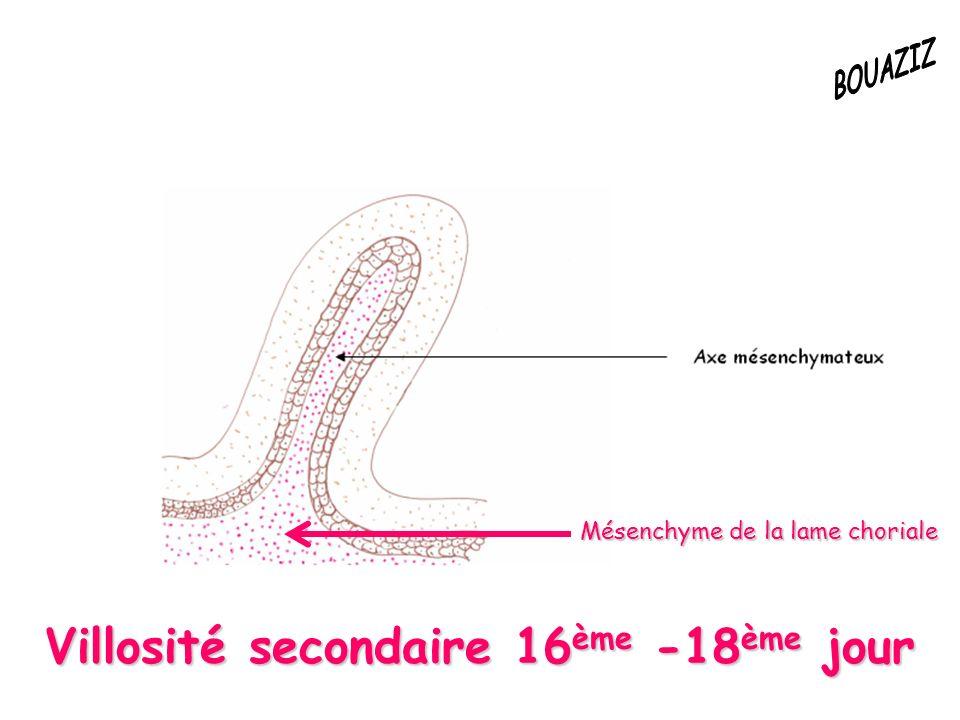 Villosité secondaire 16ème -18ème jour Mésenchyme de la lame choriale