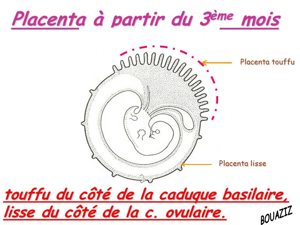 Placenta à partir du 3ème mois touffu du côté de la caduque basilaire, lisse du côté de la c.