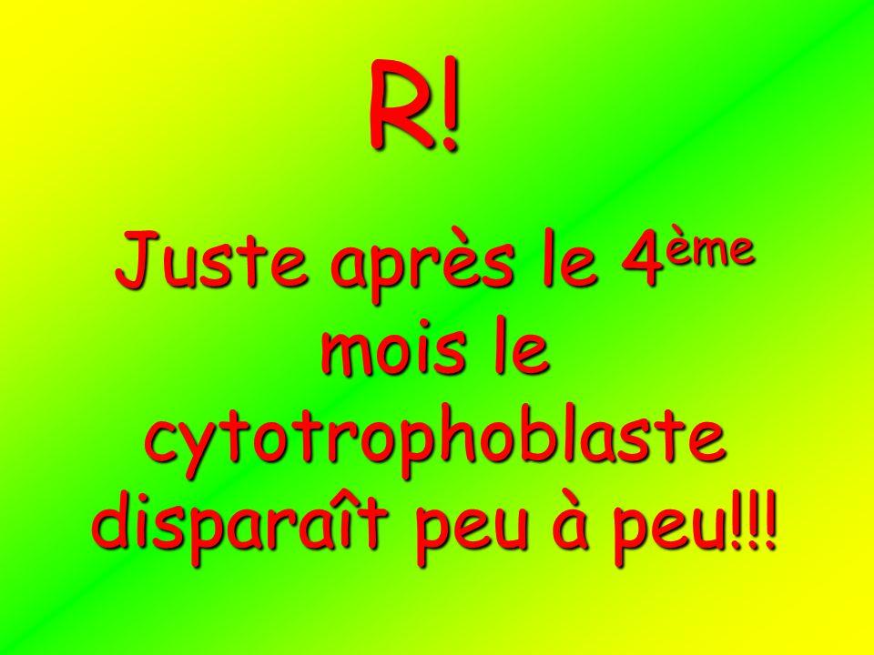 Juste après le 4ème mois le cytotrophoblaste disparaît peu à peu!!! R!