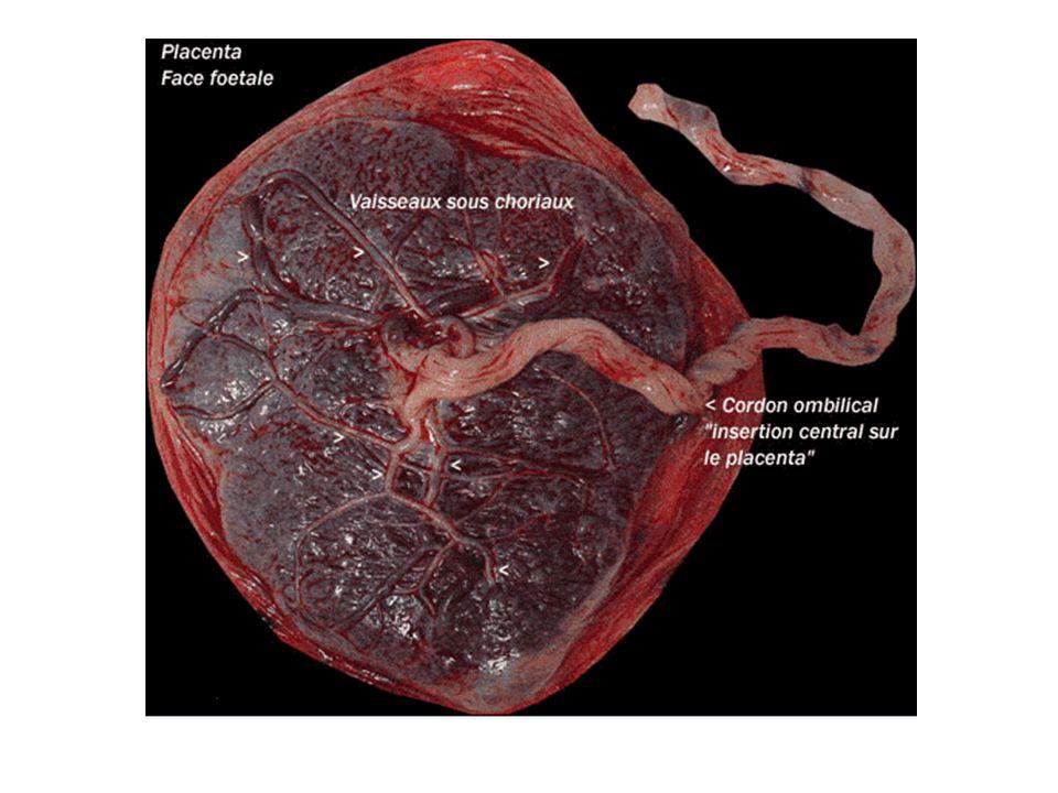 Progestérone : elle intervient dans le maintien de la grossesse.