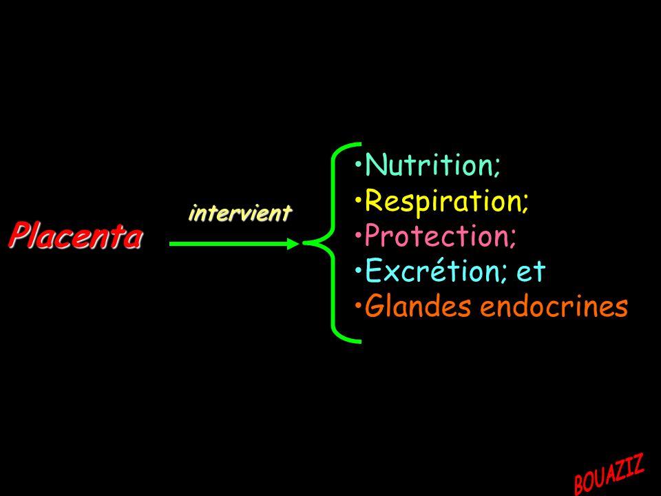 Placenta intervient Nutrition; Respiration; Protection; Excrétion; et Glandes endocrines