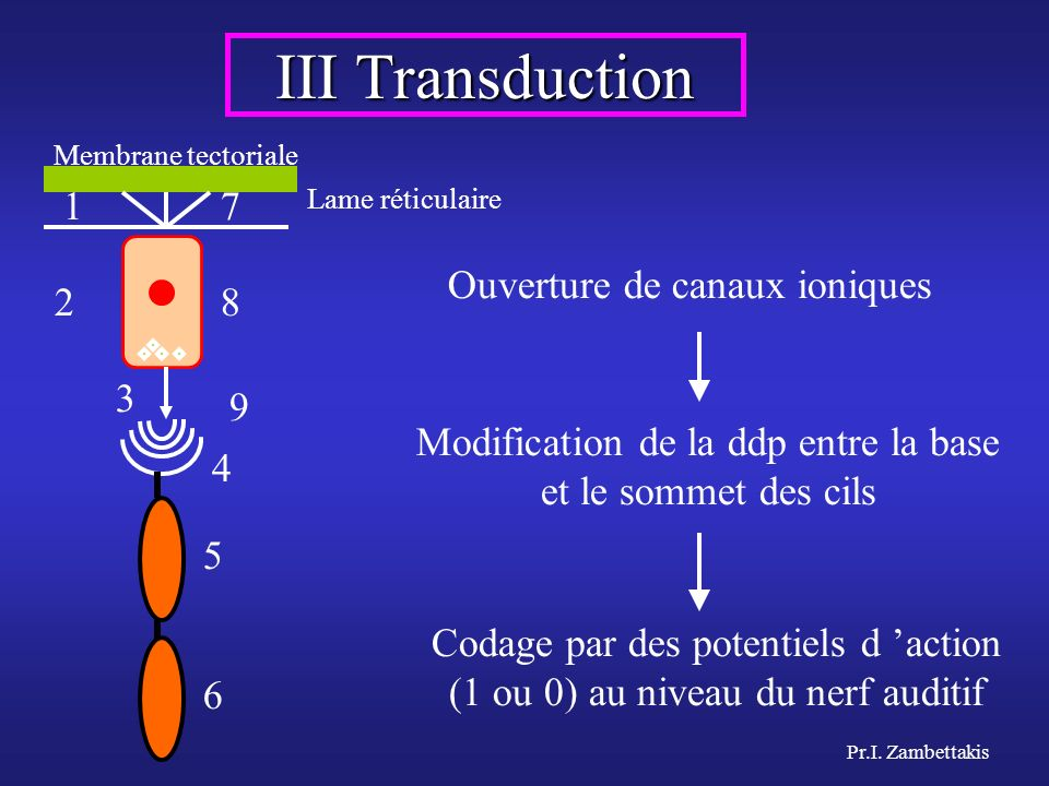 Pr.I. Zambettakis III Transduction 1 2 7 8 9 3 4 5 6 Modification de la ddp entre la base et le sommet des cils Ouverture de canaux ioniques Codage pa