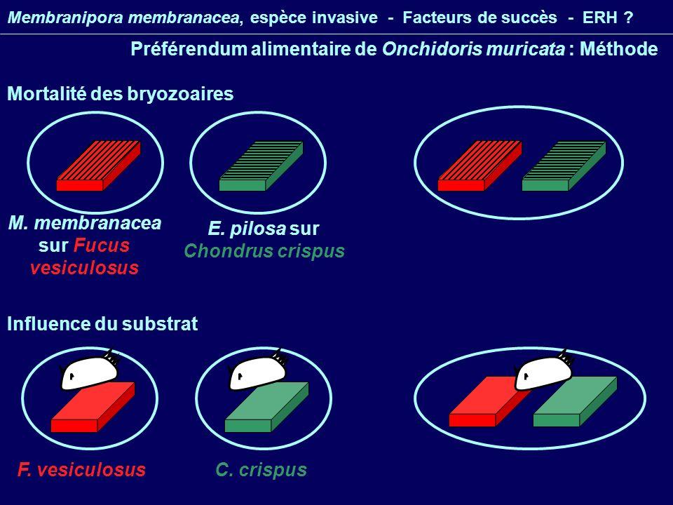 Membranipora membranacea, espèce invasive - Facteurs de succès - ERH .