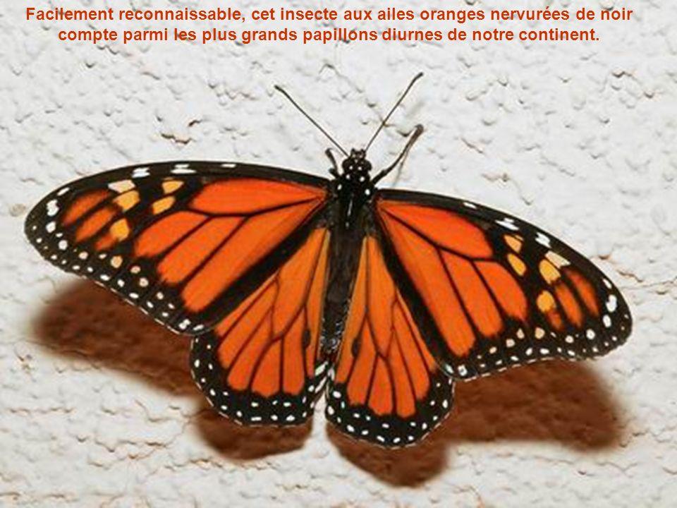 Lemblème de lInsectarium de Montréal, le monarque (Danaus plexippus plexippus), est lun des papillons nord-américains les mieux connus. Chaque année,