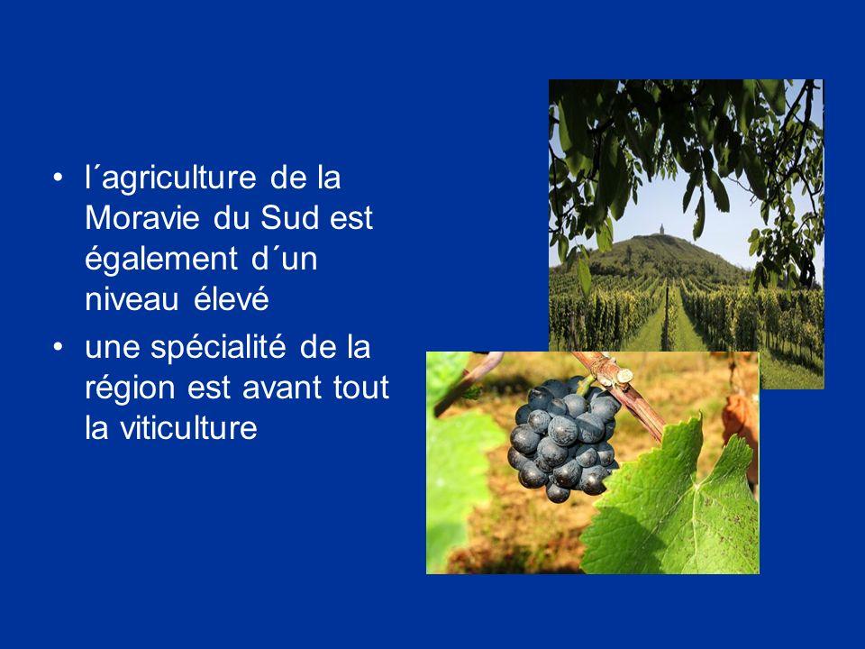 l´agriculture de la Moravie du Sud est également d´un niveau élevé une spécialité de la région est avant tout la viticulture