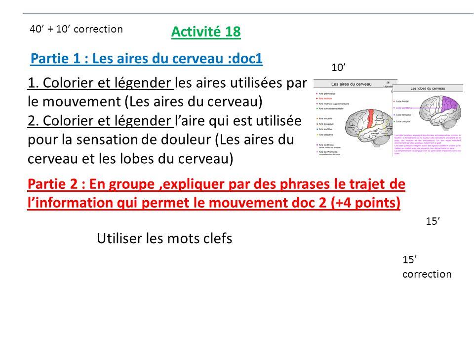 Partie 1 : Les aires du cerveau :doc1 1. Colorier et légender les aires utilisées par le mouvement (Les aires du cerveau) 2. Colorier et légender lair