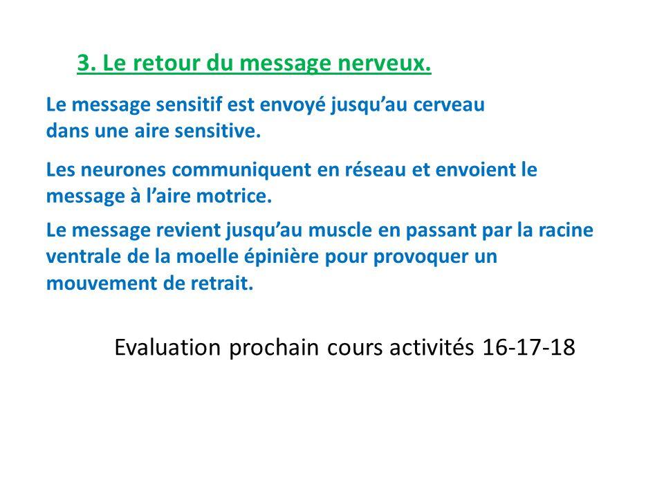 3. Le retour du message nerveux. Le message sensitif est envoyé jusquau cerveau dans une aire sensitive. Les neurones communiquent en réseau et envoie