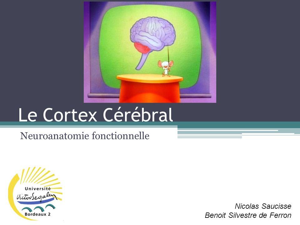 Le Cortex Cérébral I – Organisation générale II – Organisation cellulaire III – Organisation anatomo-fonctionnelle IV – Exemple dassociation daires