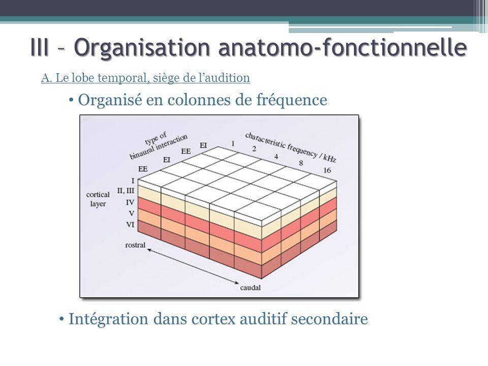 III – Organisation anatomo-fonctionnelle A. Le lobe temporal, siège de laudition Organisé en colonnes de fréquence Intégration dans cortex auditif sec