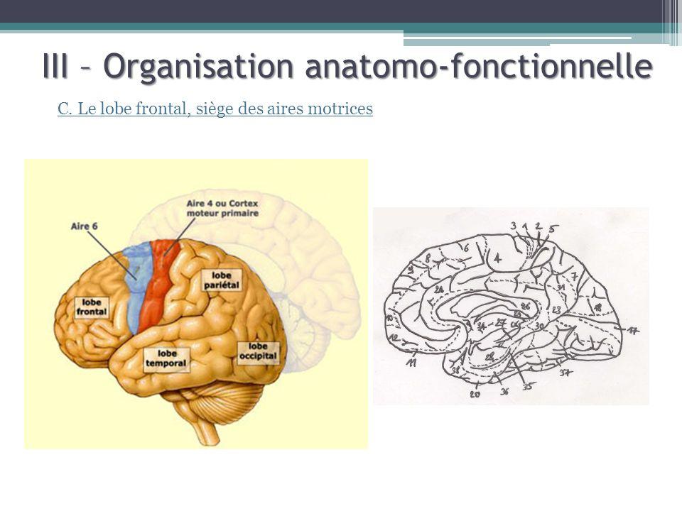 III – Organisation anatomo-fonctionnelle C. Le lobe frontal, siège des aires motrices