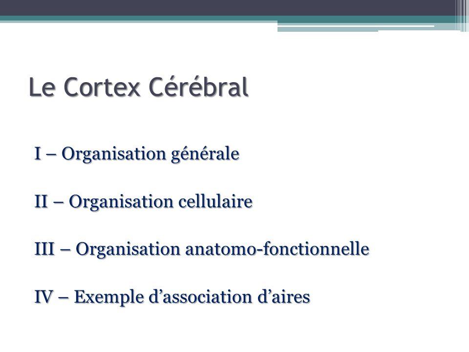 I – Organisation générale Surface : 2 m 2 Circonvolutions Du latin cortex,icis « écorce », « enveloppe » - gain de place - faciliter les échanges - délimiter les lobes