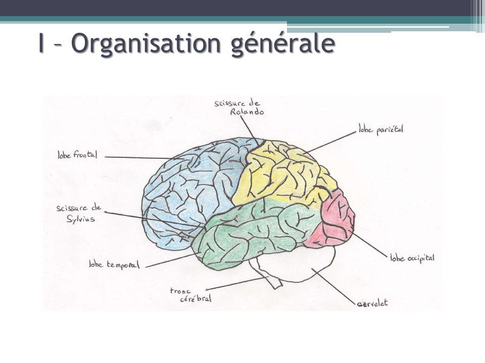I – Organisation générale