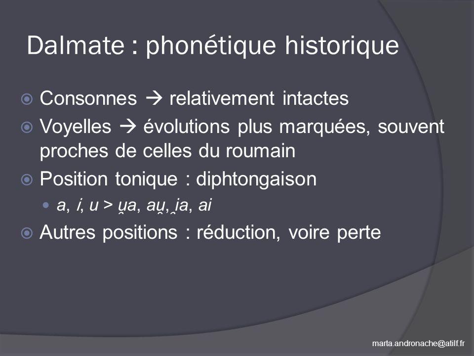 marta.andronache@atilf.fr Dalmate : phonétique historique Consonnes relativement intactes Voyelles évolutions plus marquées, souvent proches de celles