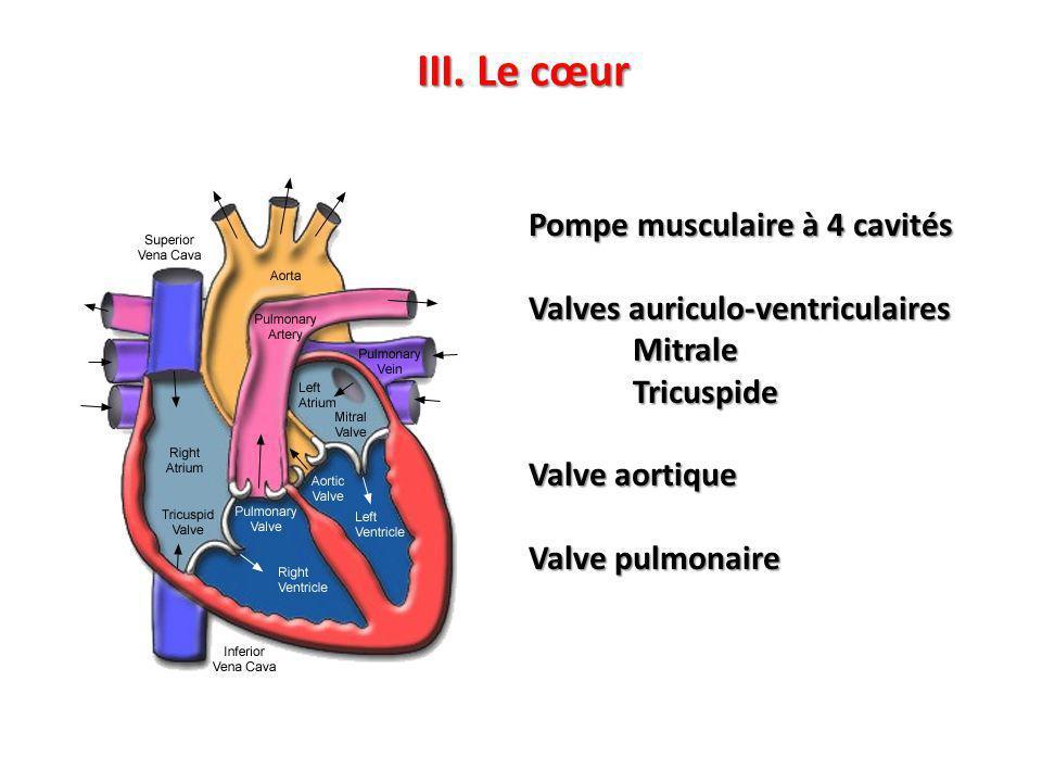 III. Le cœur Pompe musculaire à 4 cavités Valves auriculo-ventriculaires MitraleTricuspide Valve aortique Valve pulmonaire