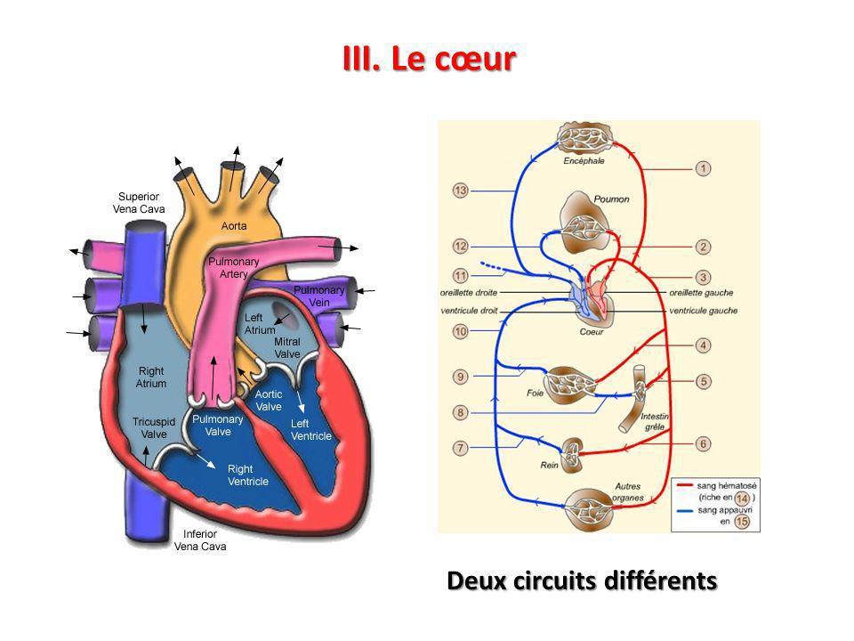 III. Le cœur Deux circuits différents
