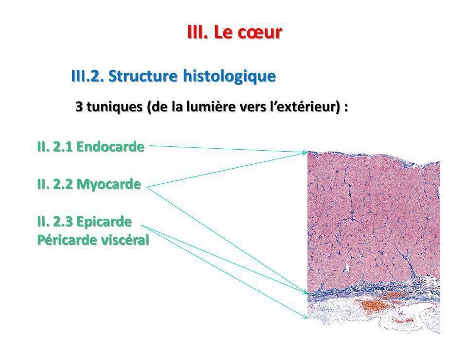 II.2.1 Endocarde II. 2.2 Myocarde II.