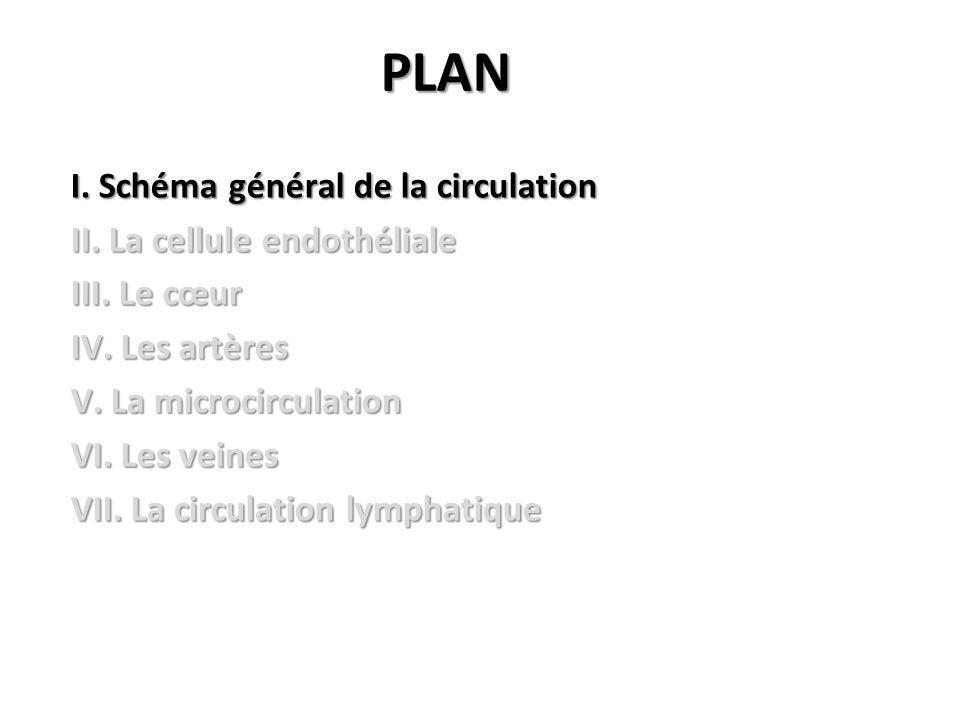 PLAN I.Schéma général de la circulation II. La cellule endothéliale III.