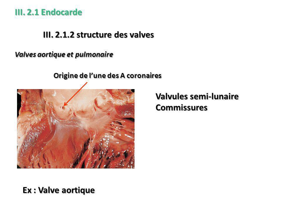 Valves aortique et pulmonaire III.2.1 Endocarde III.
