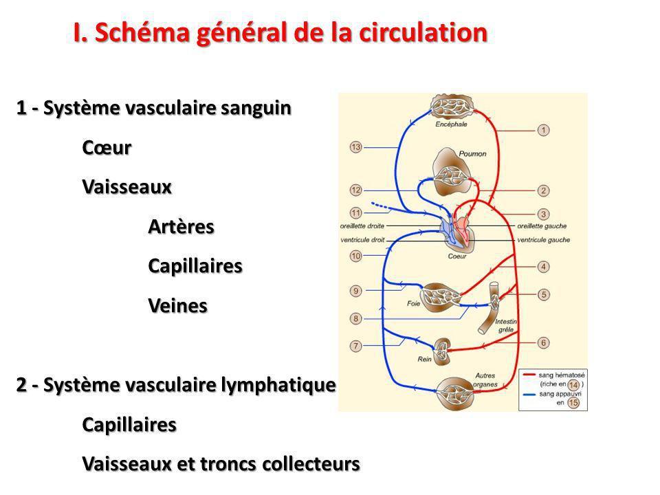 1 - Système vasculaire sanguin CœurVaisseauxArtèresCapillairesVeines 2 - Système vasculaire lymphatique Capillaires Vaisseaux et troncs collecteurs I.
