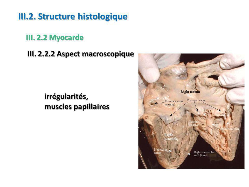 irrégularités, muscles papillaires III.2.Structure histologique III.