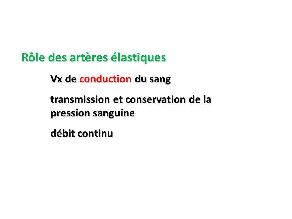 Rôle des artères élastiques Vx de conduction du sang transmission et conservation de la pression sanguine débit continu