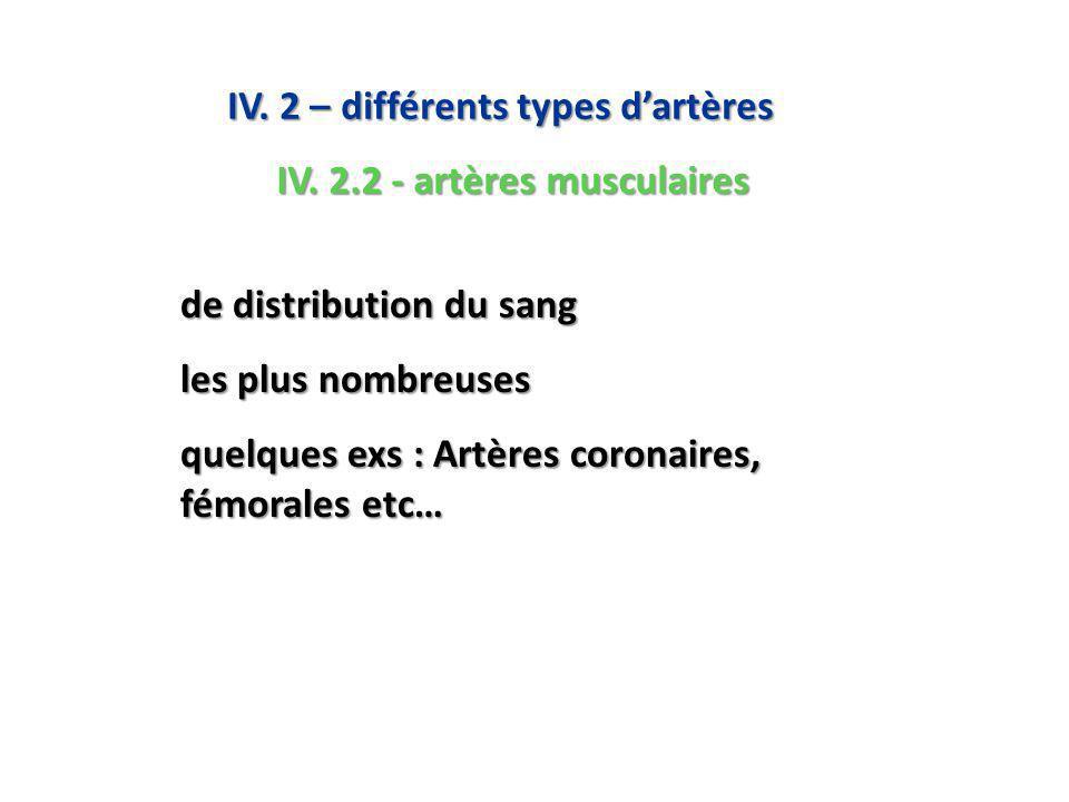 de distribution du sang les plus nombreuses quelques exs : Artères coronaires, fémorales etc… IV.