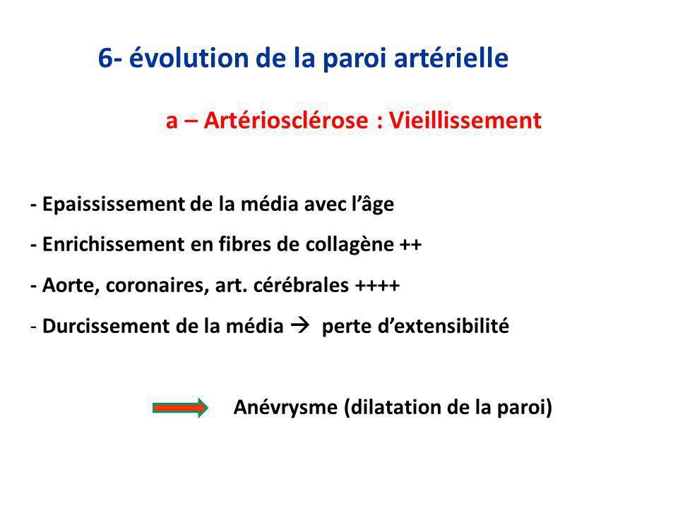 6- évolution de la paroi artérielle a – Artériosclérose : Vieillissement - Epaississement de la média avec lâge - Enrichissement en fibres de collagène ++ - Aorte, coronaires, art.