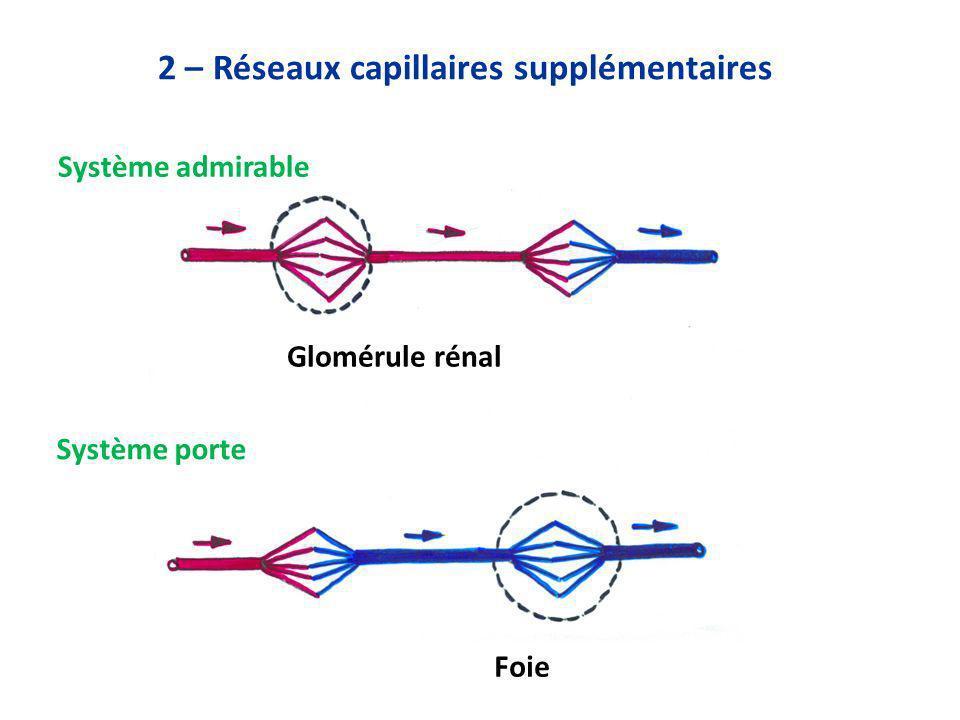 2 – Réseaux capillaires supplémentaires Système admirable Système porte Glomérule rénal Foie