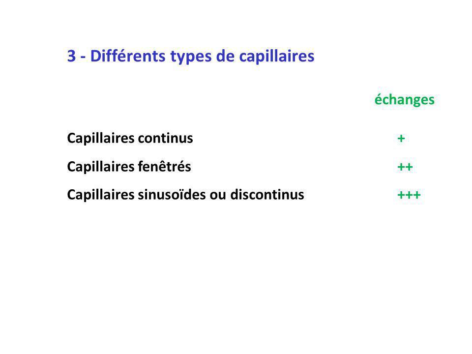 3 - Différents types de capillaires Capillaires continus+ Capillaires fenêtrés++ Capillaires sinusoïdes ou discontinus+++ échanges