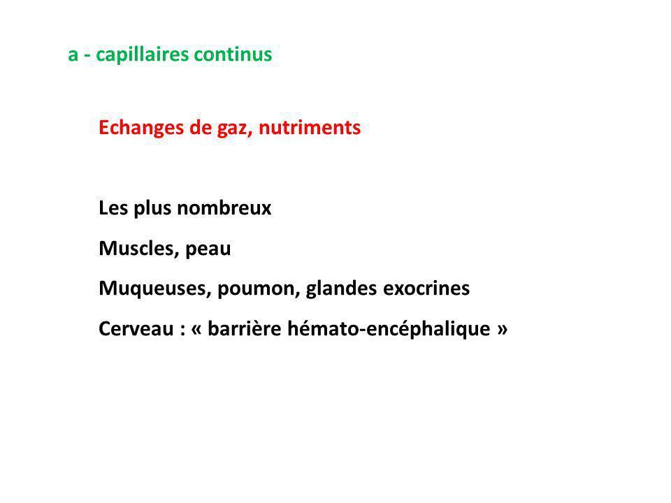 a - capillaires continus Echanges de gaz, nutriments Les plus nombreux Muscles, peau Muqueuses, poumon, glandes exocrines Cerveau : « barrière hémato-encéphalique »